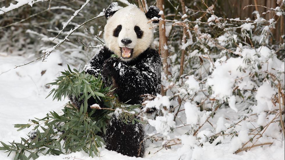 بالصور.. الحيوانات تتكيف مع الطقس البارد وتلهو بالثلوج