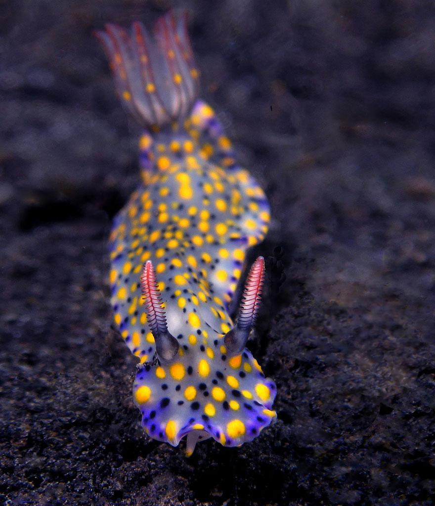 بالصور: مخلوقات بحرية ستصيبك بالدهشة من جمالها