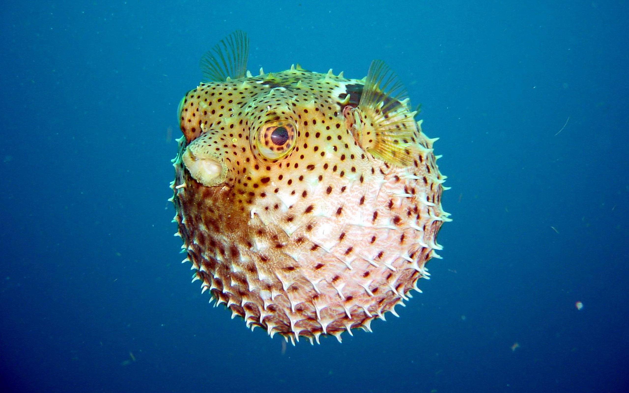 بالصور..  أغرب أنواع الأسماك في العالم
