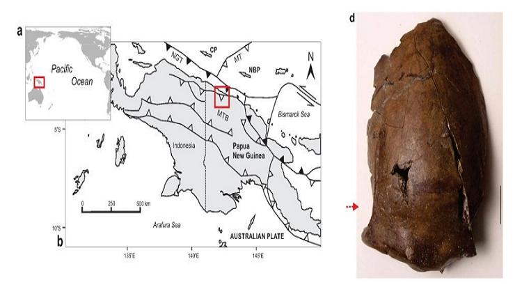 غينيا.. جمجمة نادرة لضحية تسونامي منذ 6000 عام!