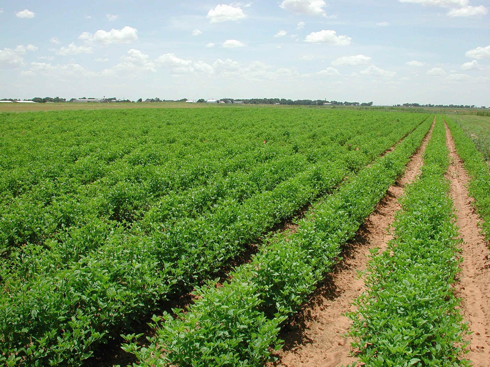 الأرصاد تقدم نصائح للزراعة حتى27 نوفمبر الجاري