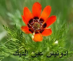 طقس العرب