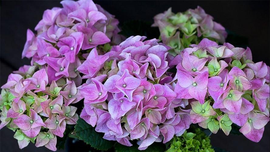 بالصور.. نباتات منزلية صديقة لمرضى حساسية الربيع